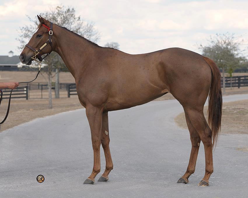 Walter Raspo POLO Magazine Polo Pony breeding polo bloodlines